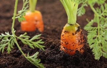UK Water Features - Grow your own vegetables in your own back garden