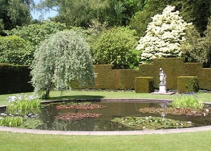 Attract Wildlife to your Garden with a Pond