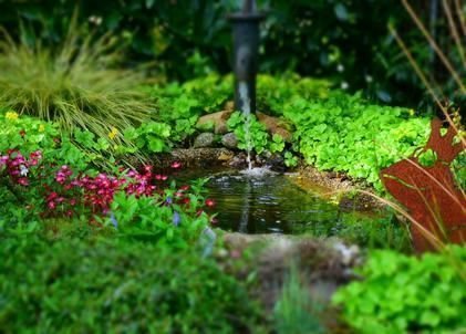 Tips for the Perfect Pond