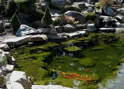 How to Install a Pond in Your Garden