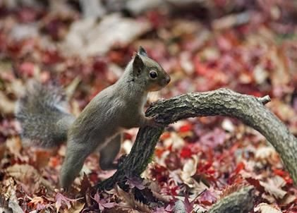 Care for your Autumnal Wildlife Garden