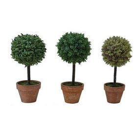 Mini Topiary Trees in Pots (Pack of 3)