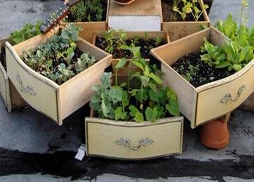 The Urban Garden Trend For Those With Limited Space To Grow