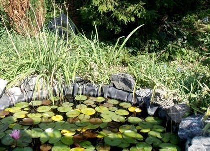 Pond Maintenance For Autumn