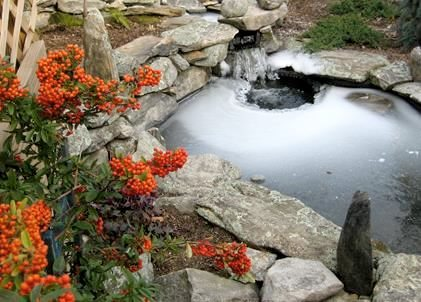 Avoid Your Pond Freezing Over This Winter