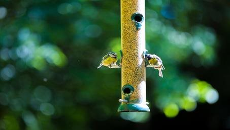 How to Maintain a Wildlife Friendly Garden