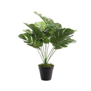 View Artificial Plants & Topiary Products