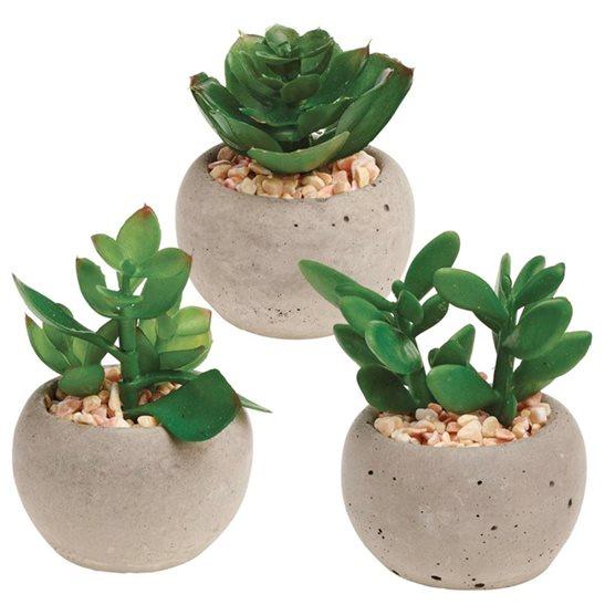 Succulent Plant In A Pot Various Designs