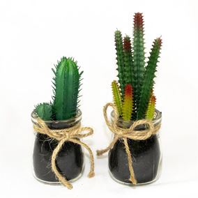 Cactus Plants in Glass Jar with Jute Twine (Twin Pack)