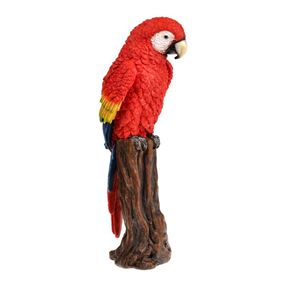 Red Rainforest Parrot Perching on Tree Stump