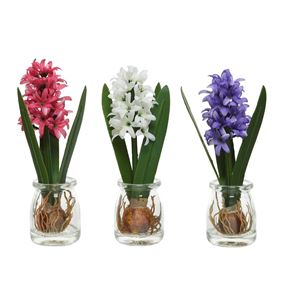 Artificial Hyacinths in Glass Jars (Triple Pack)