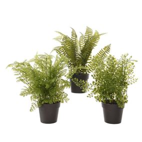 Assorted Artificial Potted Ferns (Triple Pack)