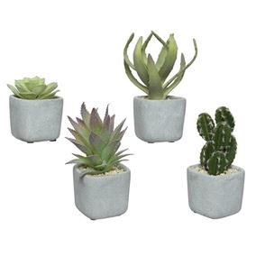 Pack of Four Succulents In Concrete Pots