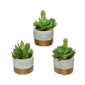 Assorted Succulents In Decorative Concrete Pots (Triple Pack)