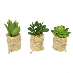 Set of 3 Succulents in Pots Wrapped in Jute