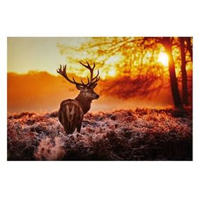 Winter Forest Scene with Stag Lit Wall Canvas